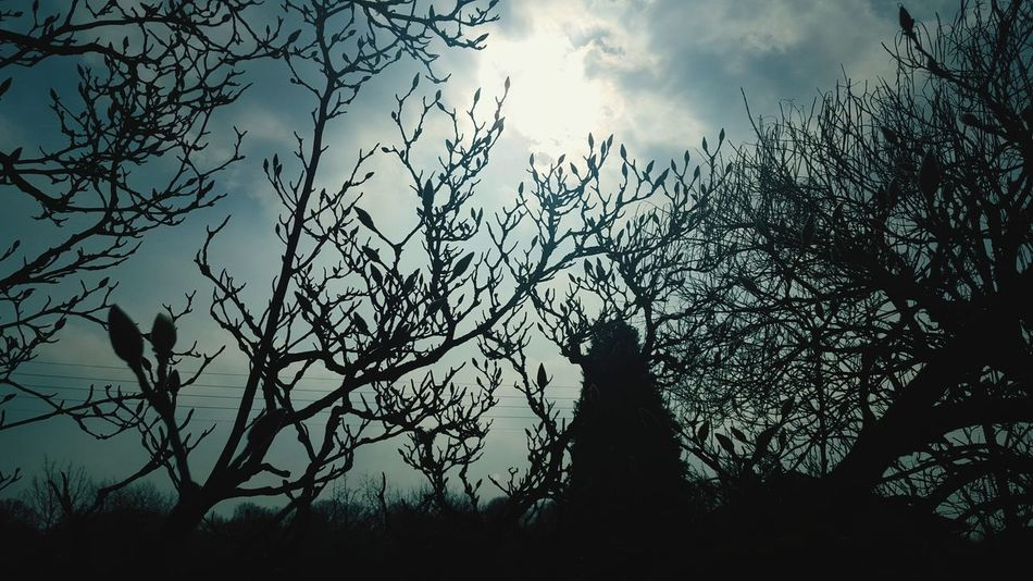 Bourgeons Nature Nature Photography Ciel Sky Bleue Blue Sky Sun Soleil Soleil D'hiver