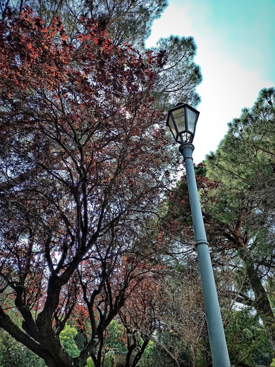 LOW ANGLE VIEW OF STREET LIGHT ON TREE
