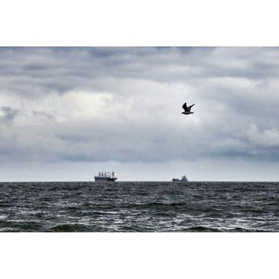 Aloneonthesea Aloneonthewater Aloneonthesky Bluesky Baltyk Gdansk Jelitkowo Sea Seabirds Freedom Canon Canon6d Ultrasonic Gtcreate