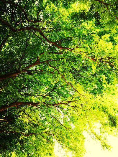 Green Living First Eyeem Photo