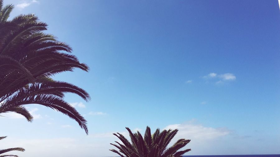 Palm Tree Sky Blue Palm Frond Beauty In Nature Nature Lanzarote Island Nature Day