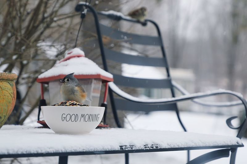 Good Morning Bird Photography Birds Bird Winter Snow Cold Temperature Text Weather Communication Focus On Foreground Outdoors Nature Frozen Snowing Day Close-up No People