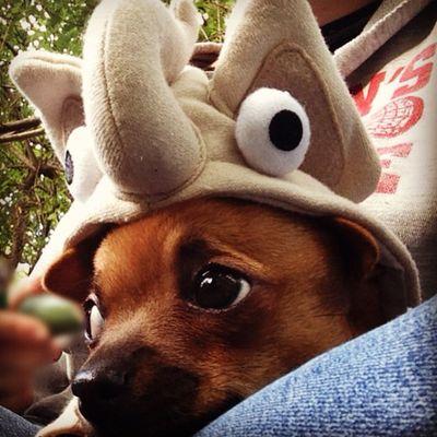Elephant pup! ?? Dailyzigga