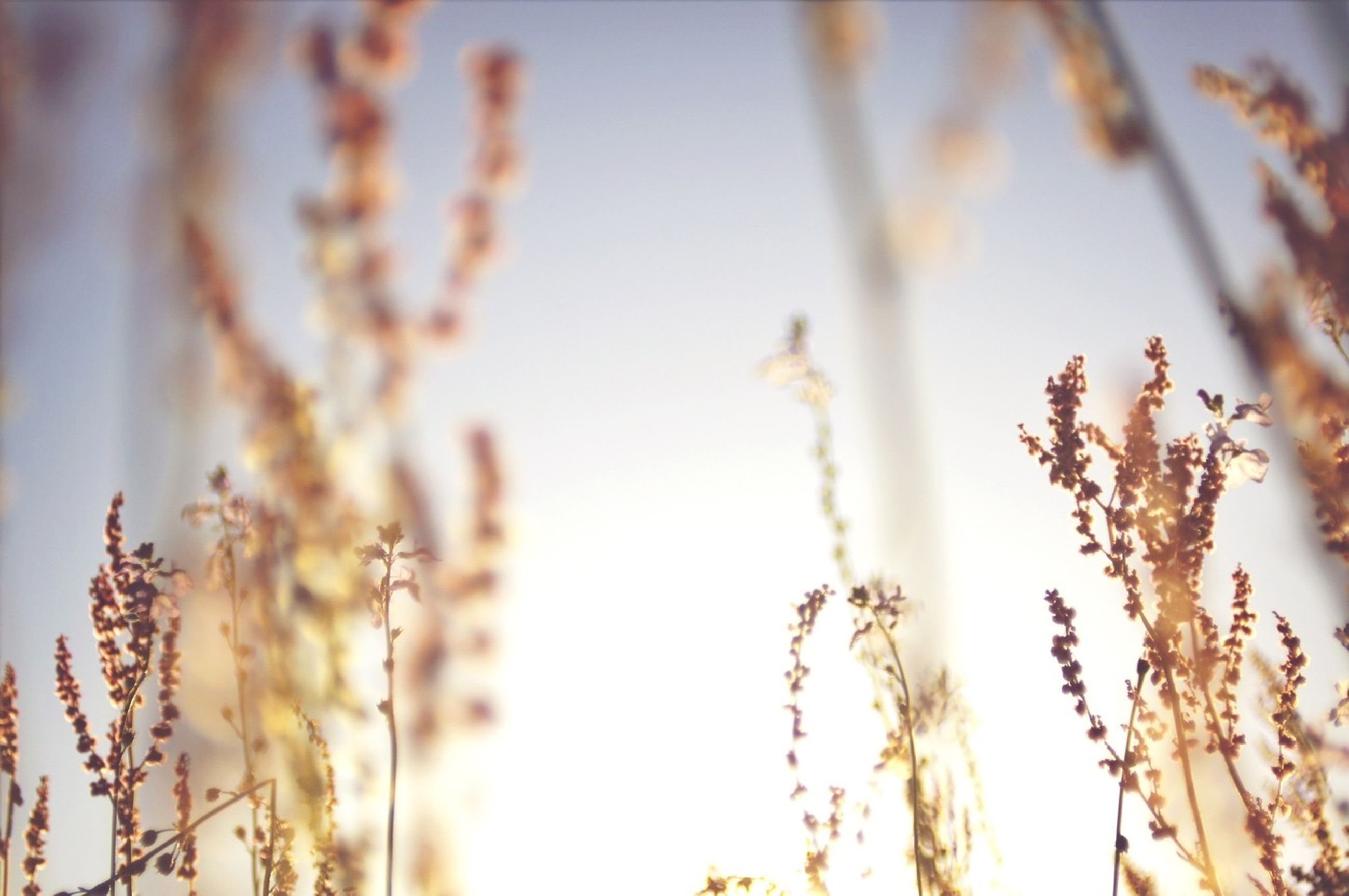 focus on foreground, growth, plant, nature, close-up, stem, selective focus, beauty in nature, growing, tranquility, field, twig, flower, outdoors, freshness, day, no people, dry, fragility, branch