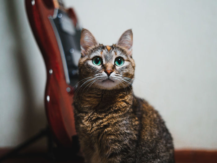 Domestic cat Capture Tomorrow Cat Domestic Cat Pets Domestic Domestic Animals Feline Mammal One Animal Looking At Camera Portrait Indoors  Vertebrate No People Whisker Focus On Foreground Sitting Tabby Animal Eye