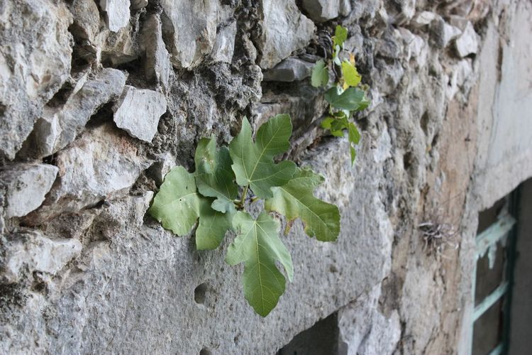 Close-up of leaves growing on tree trunk against wall