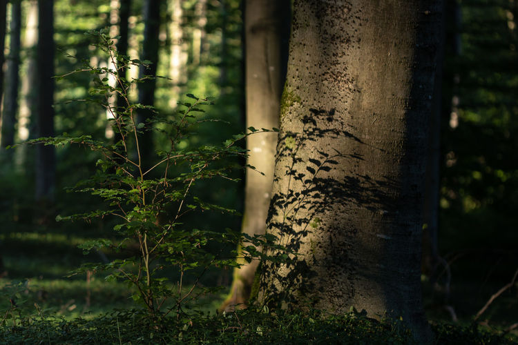 Shadows & Lights Beauty In Nature Focus On Foreground Forest Nature Outdoors Selective Focus Sunlight Tranquility Tree