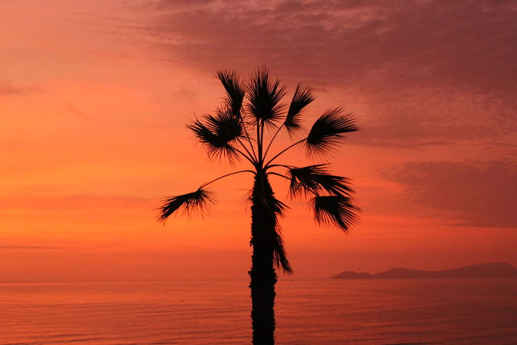 Silhouette palm tree at beach against sea during sunset