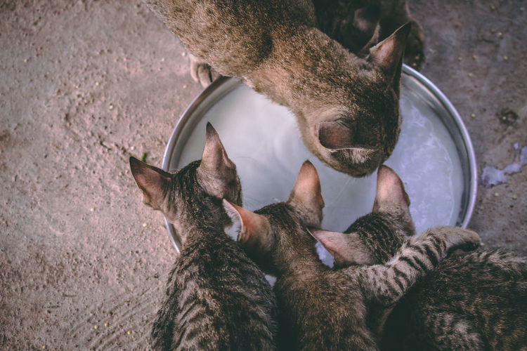 Animal Animal Family Animal Themes Care Cat Close-up Day Domestic Domestic Animals Domestic Cat Feline Group Of Animals High Angle View Indoors  Mammal No People Pets Relaxation Togetherness Two Animals Vertebrate