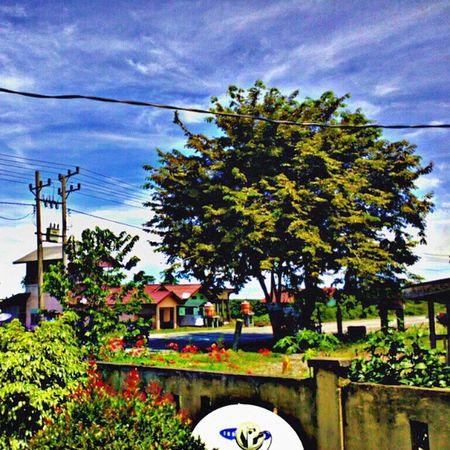 Skylover Instragram HdrIndonesia Greentree fresharea planetearth