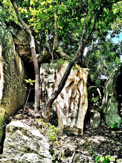 buddha Nature Attraction Stone Travel Photography Day Outdoors Growth Sunlight No People Nature Plant Tree Shadow Grass Beauty In Nature Close-up Buddha Statue In Thai Art Rocky Mountains