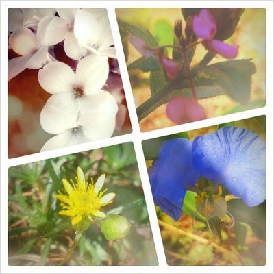 toda flor tem seu valor.Bom dia mundo! Theflowers florzinhadocampo Maroliphotografy Janetemaroli pixels photografy vida Deusdavida