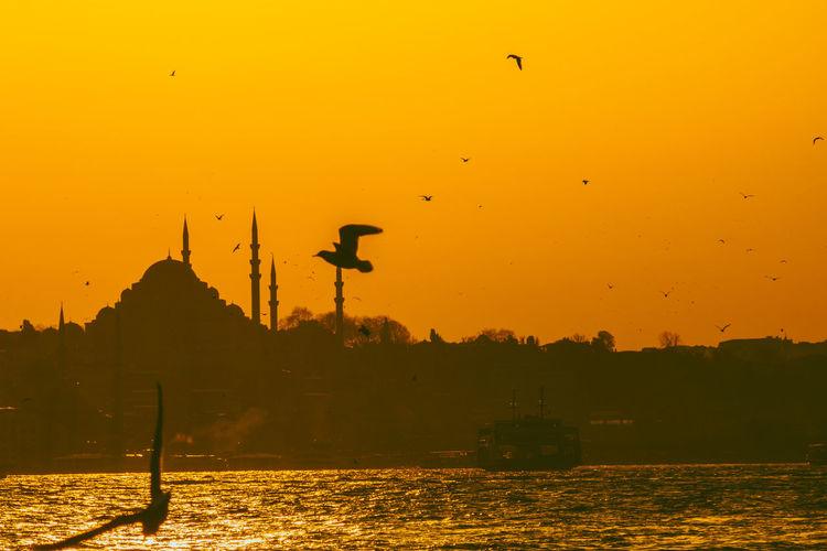 Silhouette birds flying over orange sunset sky