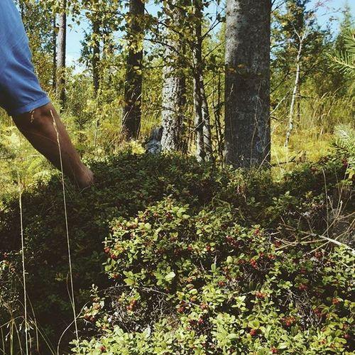 В Финляндии вдоль дороги растет огромное количество брусники и черники. Почему-то ее никто там не собирает. идея_для_стартапа Imatra Vscocam Vscorussia