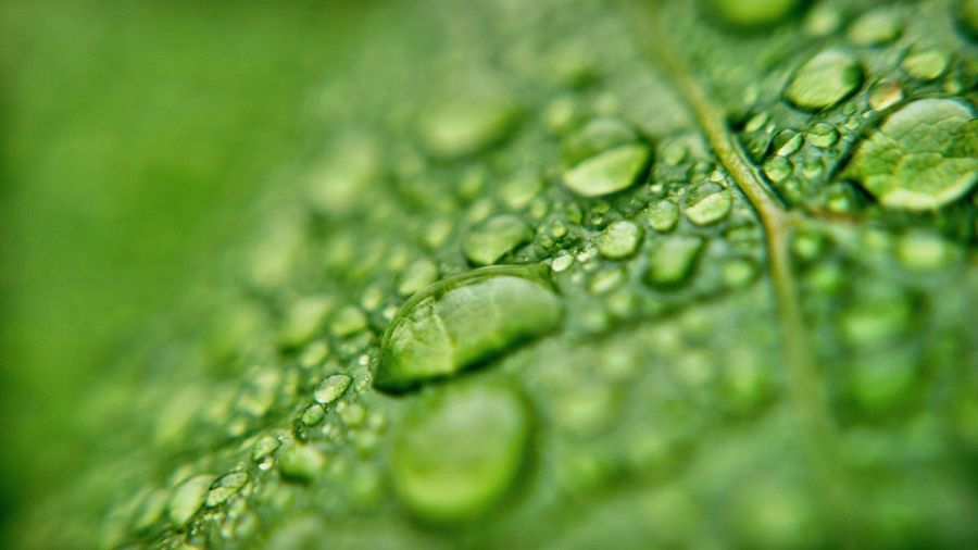 Selective focus of raindrops on leaf