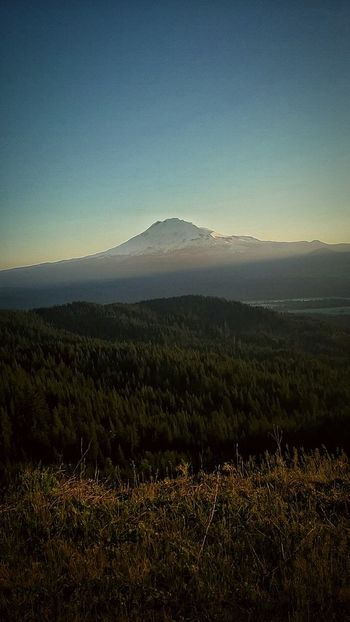 Mt. St. Helens  No People Scenics Outdoors Dawn Day Tree Beauty In Nature Flower Nature Backgrounds Outside Photography Freshness Spring Grass Blue Green Sky Beauty In Nature Pacific Northwest  Hill Mountian View Mountian  Mountian Top The Great Outdoors - 2017 EyeEm Awards Lost In The Landscape Shades Of Winter EyeEmNewHere