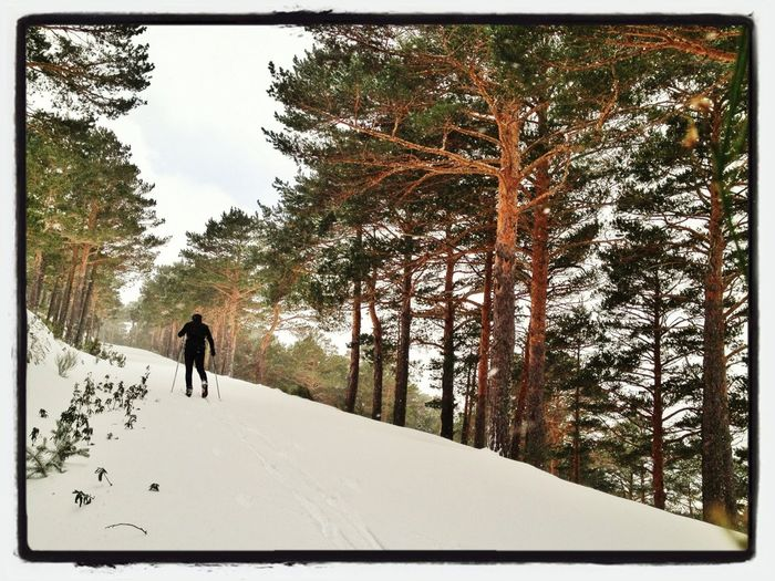 Entreno Mañanero 12km #esquídefondo #LaBarranca #skicrosscountry #pinar #training #mountain #snowstorm #gasss