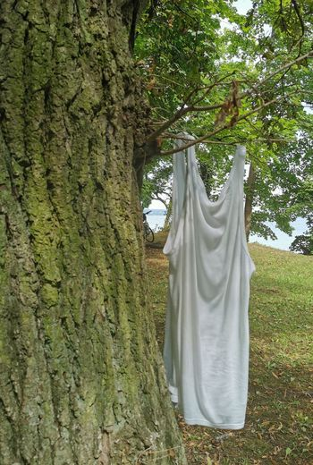 Clothes hanging on tree trunk in forest
