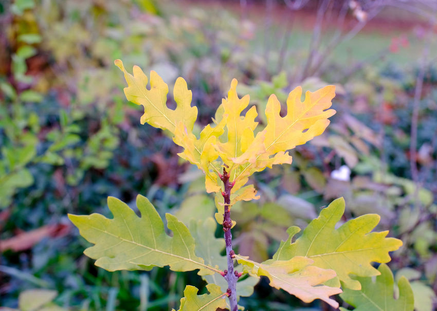 Plant Part Leaf Yellow Close-up Vulnerability  Nature No People Outdoors Focus On Foreground