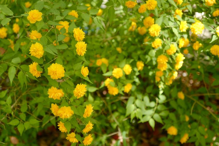 Flowering Plant Plant Flower Beauty In Nature Growth Yellow Fragility