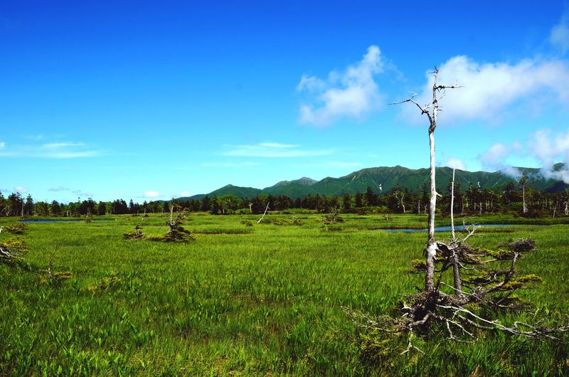 Trekking Long Trail Daisetsuzan National Park Hokkaido Field Agriculture Sky Outdoors Nature Landscape No People Day Beauty In Nature Grass Tree Mountain