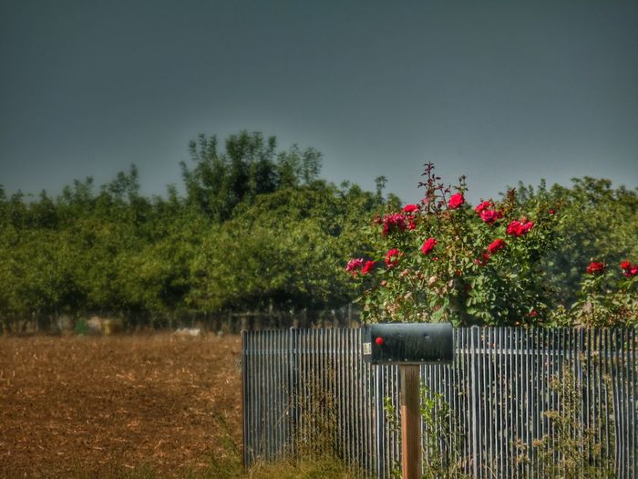 Painting the roses red... The Minimals (less Edit Juxt Photography) Rural Scenes Rose Red Landscape