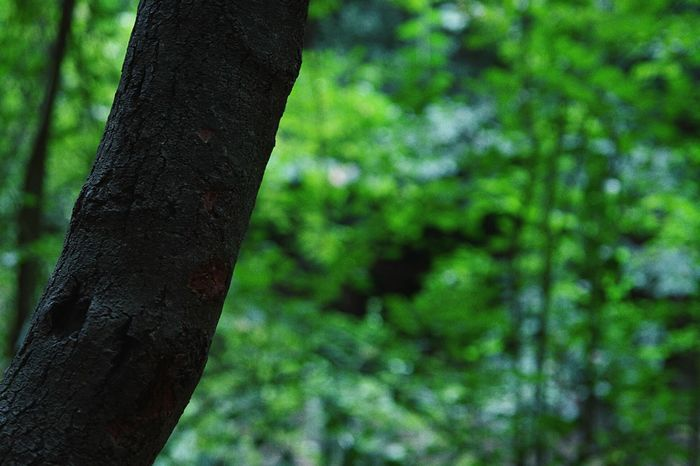 Tree Trunk Tree Nature Focus On Foreground No People Tranquility Outdoors Day Beauty In Nature Goodvibes Good Views Amateurphotography MyLifeInPictures Beautiful