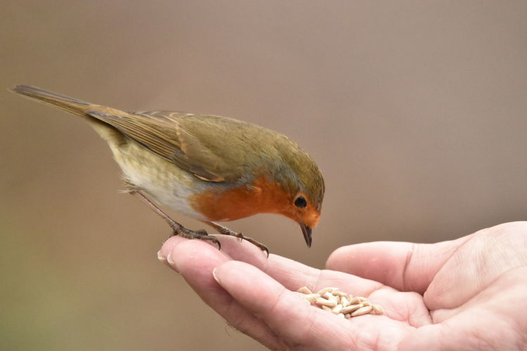 Close-up of hand with bird