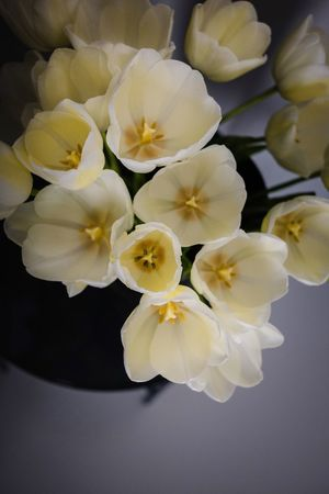 Saying hello again with some flowers Light Colours Lifestyles Close-up Tulips Flower Plant Flowering Plant Beauty In Nature Inflorescence Petal Close-up Flower Head Nature High Angle View Full Frame No People Freshness White Color