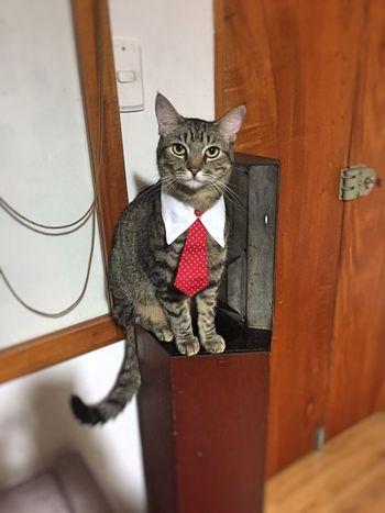 Domestic Cat Pets Animal Themes Cats Of EyeEm Catslife Adoptanocompres
