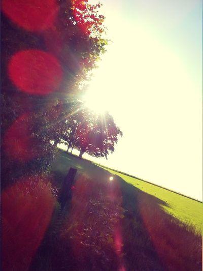 Baum, Bäume, Sonne, Sonnenstrahlen,