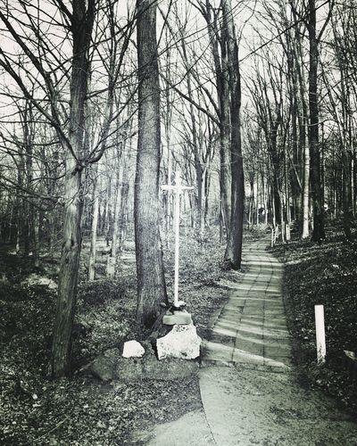 Blackandwhite Thatway Cross Wintertime Packwalk Together EyeEmNewHere