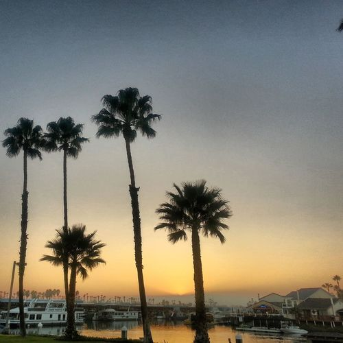 Gorgeous! Sunset Palm Trees Relaxing California