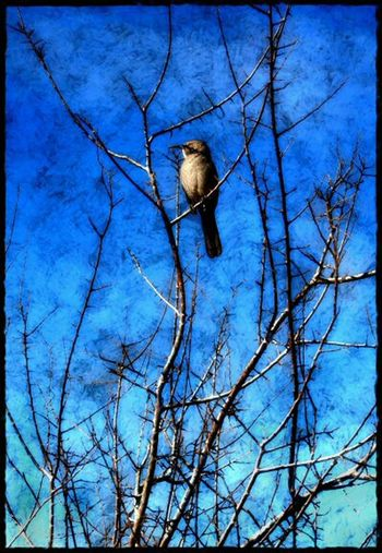 Blue Trees Bird