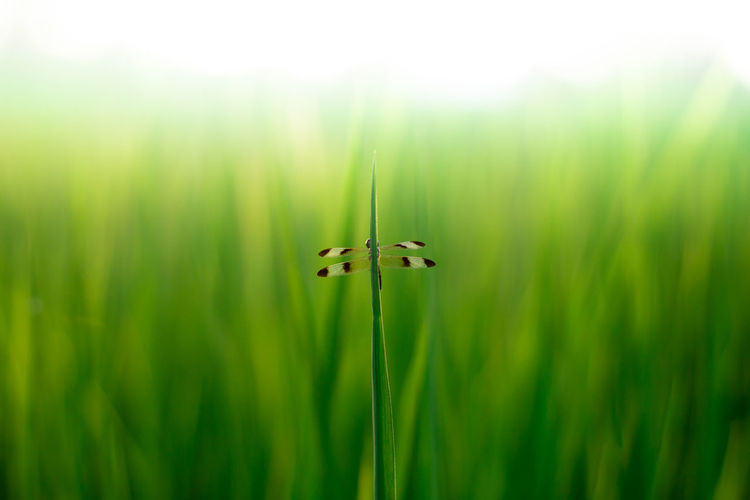 Close-up of grasshopper on grass