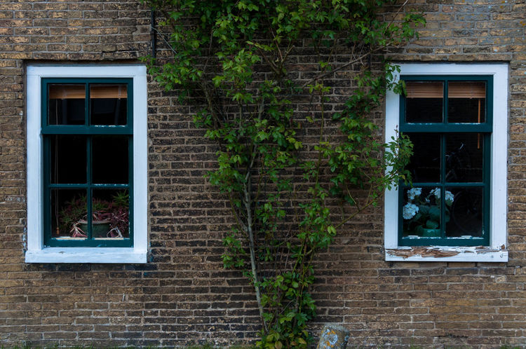 Window Building Exterior Architecture Built Structure Building Plant Day Wall Brick Wall No People Brick House Outdoors Wall - Building Feature Residential District Nature Growth Tree Glass - Material Plant Part Window Frame
