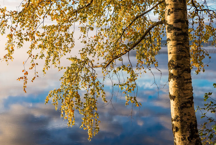 Scenic view of autumn landscape, fall colors trees, blue water, tree reflected in lake, seasons change, sunny morning, autumnal park, fall nature. Tree Beauty In Nature Sky Branch Growth Trunk Tree Trunk Nature Tranquility Cloud - Sky No People Outdoors Autumn Low Angle View Tranquil Scene Scenics - Nature Leaf Plant Reflection Fall Colors Fog Misty Finland Tranquility Moment Of Silence