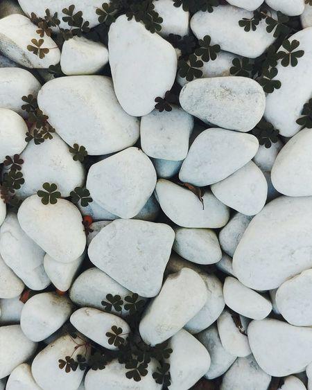 Landscape EyeEm EyeEm Best Shots EyeEm Of The Week EyeEm Nature Lover Stone Stones Green White Color Plants