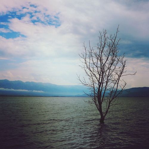 Lonely tree Great Outdoors - 2018 Eyeem Awards Sky Cloud - Sky Beauty In Nature Tranquility Scenics - Nature Tranquil Scene Water Tree No People Day Non-urban Scene Horizon Solitude Plant Sea Nature Outdoors Isolated Land
