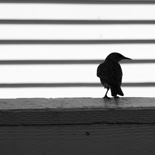 EyeEm Selects Bird Perching Close-up
