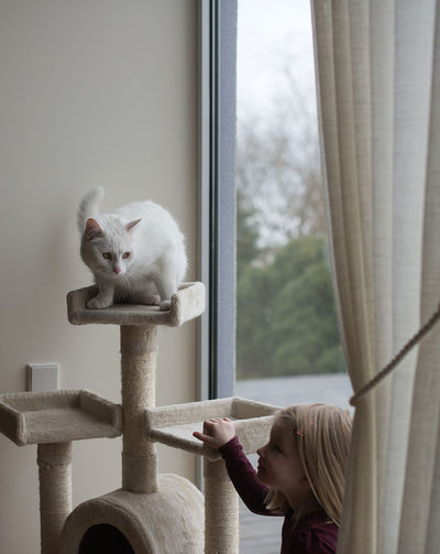 Cat Home Cat Cat House Childhood Communication Cute Day Domestic Domestic Animals Domestic Cat Feline Girl Hairstyle Indoors  Innocence Kid Looking Mammal One Animal One Person Pets Portrait Real People White Cat Window