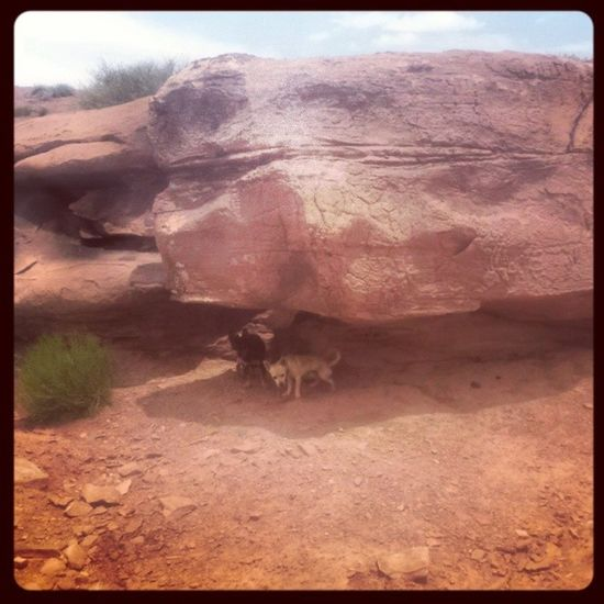 Arizona AZ Holbrook Holbrookaz holbrookarizona oneofthosedays onmyway canyon desert cliffs tylersspot chill sunburnt sunburn hiking dogs pups hunter minpin chihuahua terrier terriermix blacknbrown oursons twinkie whitefur shade