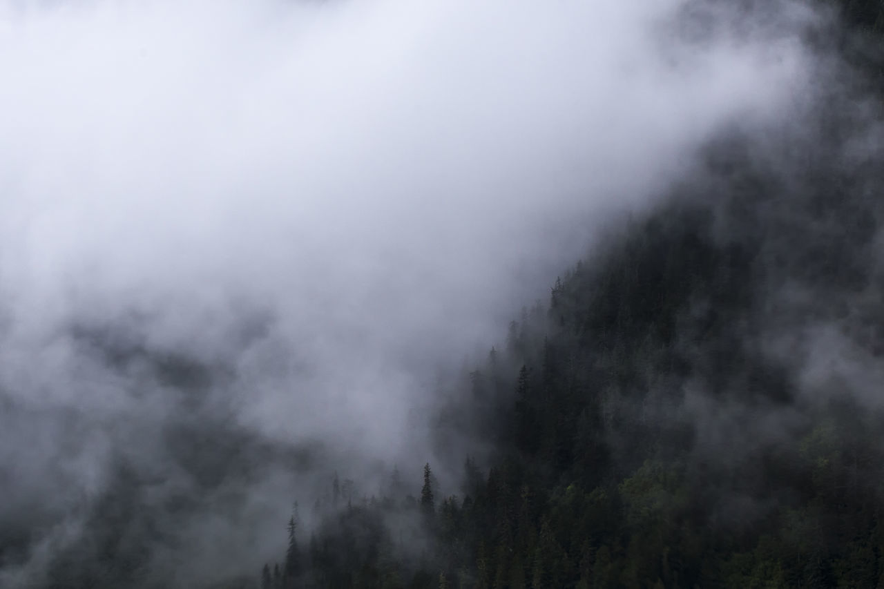 HIGH SECTION OF PLANTS AGAINST CLOUDY SKY IN FOGGY WEATHER