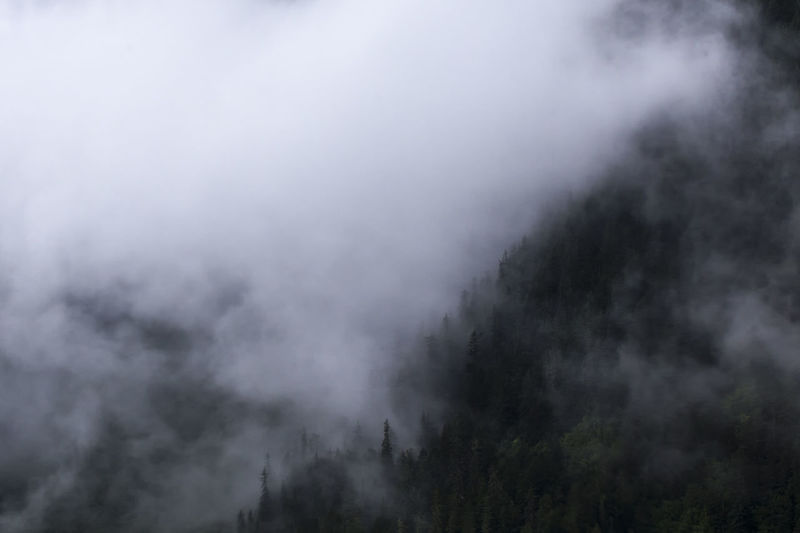 High section of plants against cloudy sky during foggy weather
