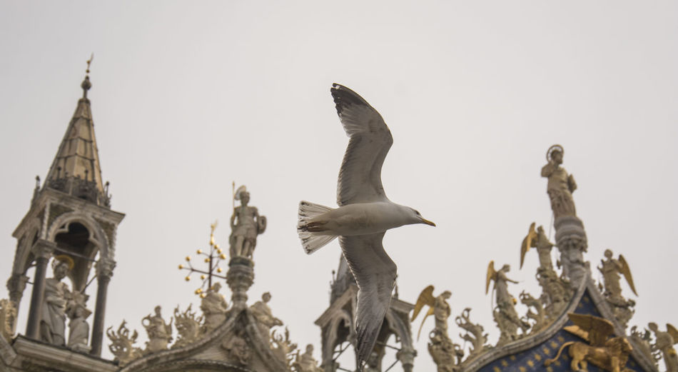 Animal Themes Architecture Art Art And Craft Bird Building Exterior Built Structure Clear Sky Creativity Famous Place History Human Representation Low Angle View Place Of Worship Religion San Marco Venezia Sculpture SEAGULL IN FLIGHT Sky Spirituality Statue