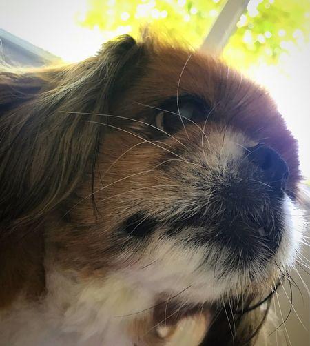 Perfection Dog Love One Animal Wakinguptothis