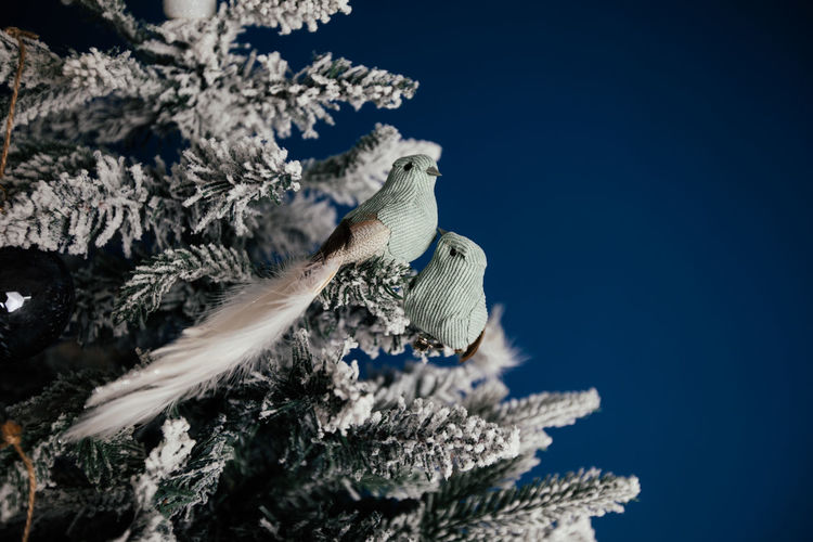Low angle view of snow on tree against blue sky
