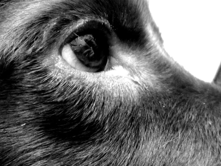 Animal Body Part Animal Eye Animal Hair Day Detail Domestic Animals Nature No People Pets Selective Focus
