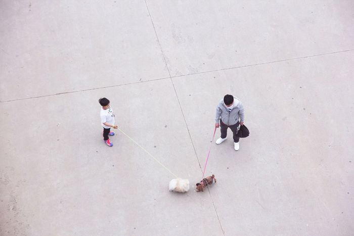 Greetings. Seoul. Showcase: February Seoul Minimalism Minimal Minimalobsession Korea South Korea ASIA Dogs Meetings Greetings Dog Love Love Date Animal Themes Pet Portraits Cute Dating Dog Dogs Of EyeEm Couple Double Date