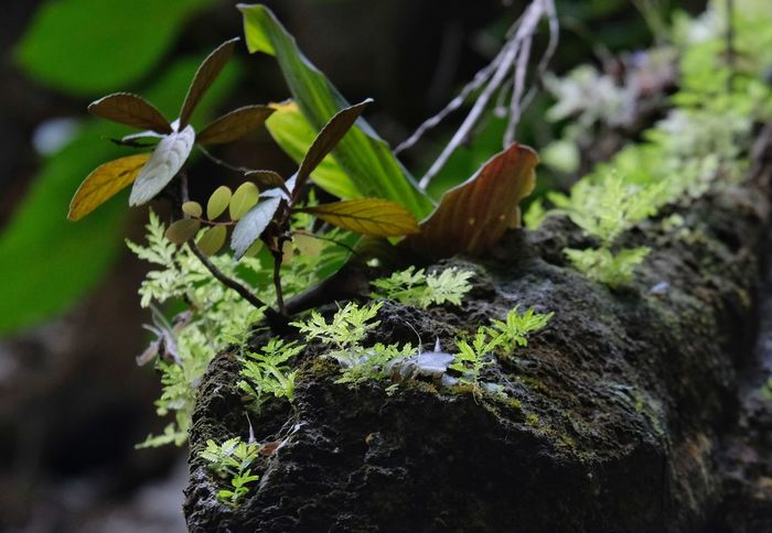 if you grow in out of reach area you will survive Life At The Cliff Leaf Moss Close-up Plant
